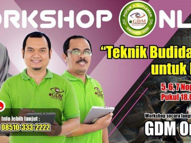 Workshop Online Gratis Tenik Budidaya Lele Untuk Pemula